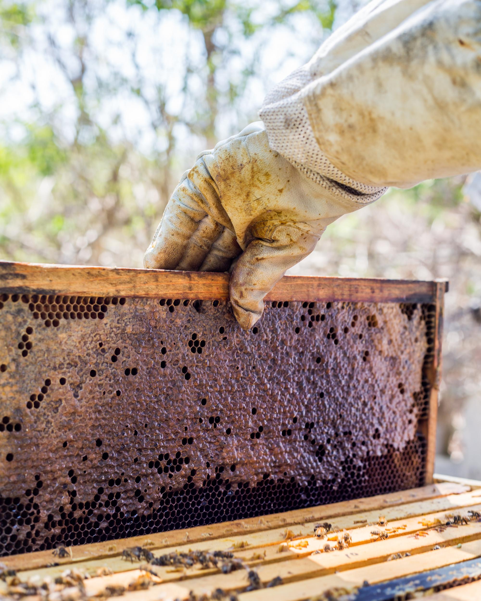 Beekeeper-5.jpg