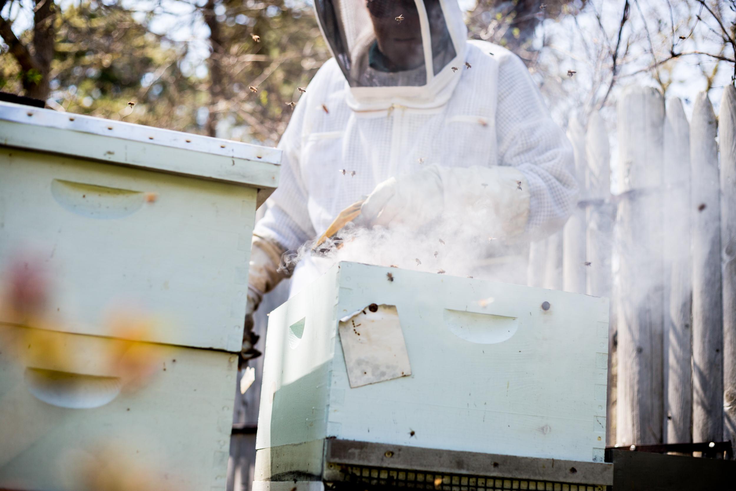 Beekeeper-8.jpg