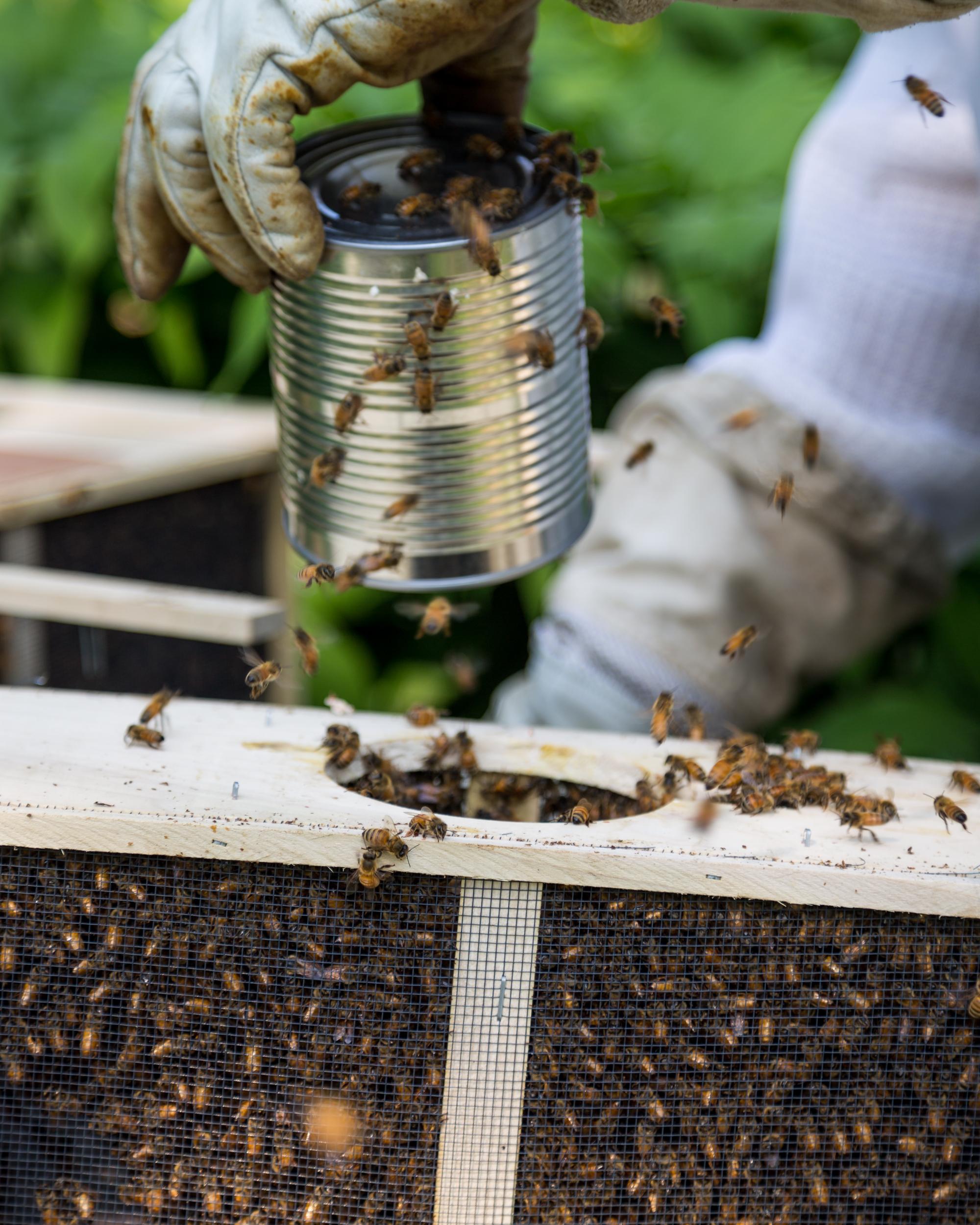 Beekeeper-16.jpg