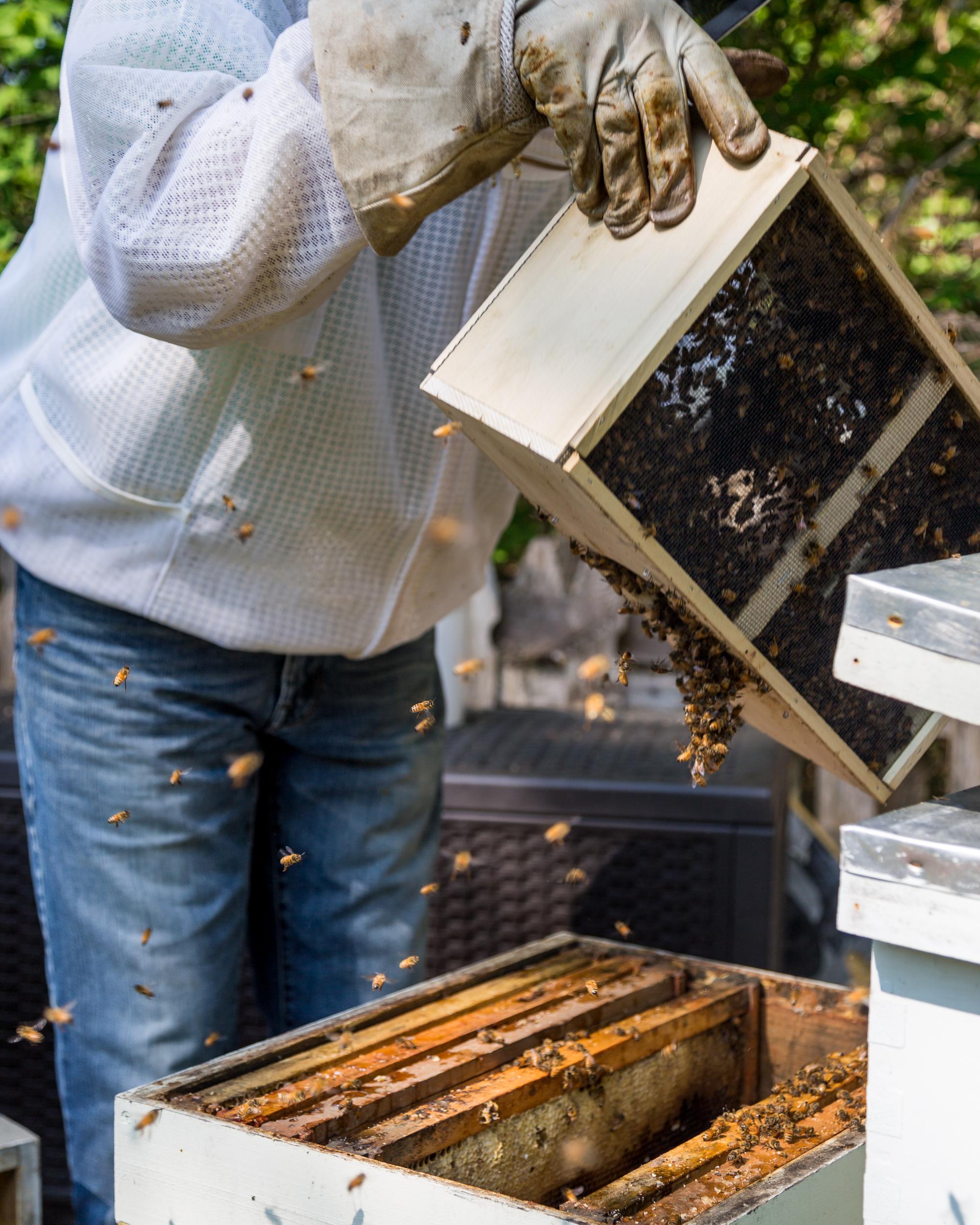 Beekeeper-20.jpg