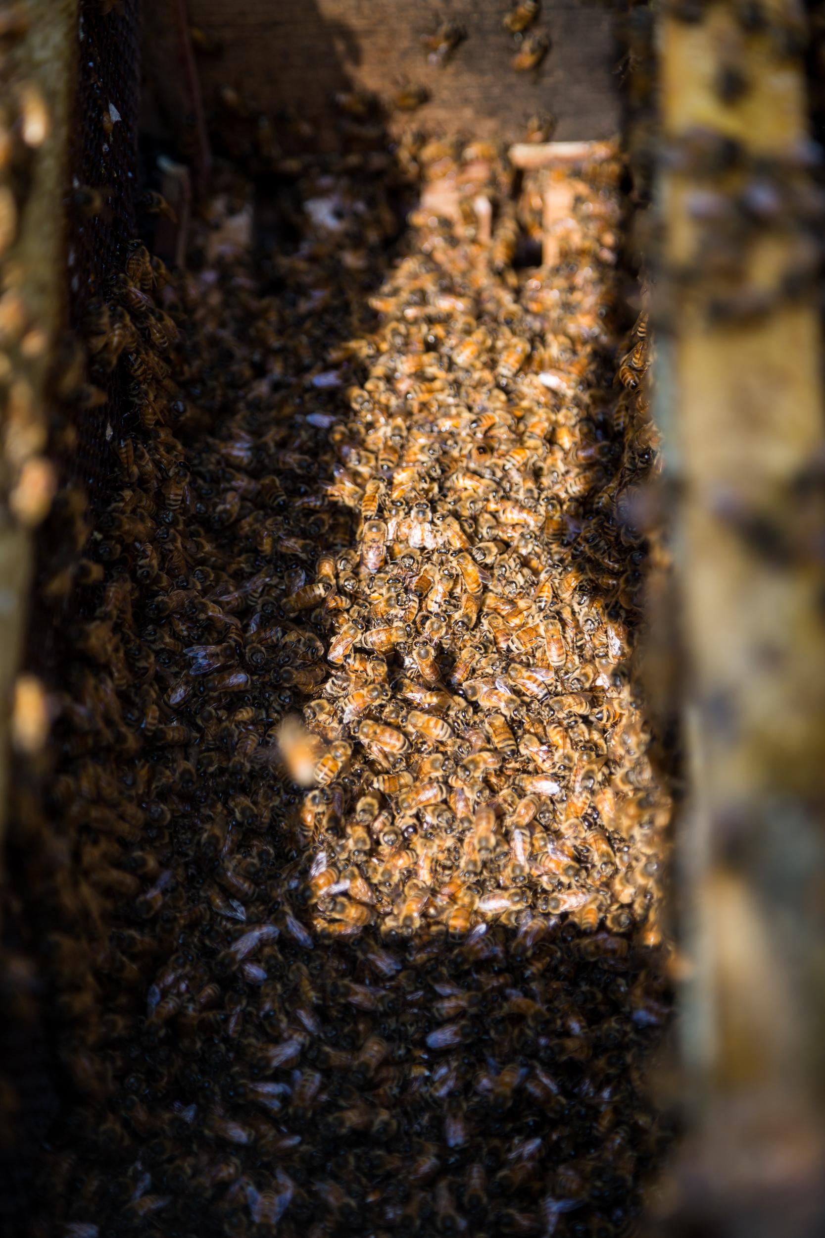 Beekeeper-22.jpg