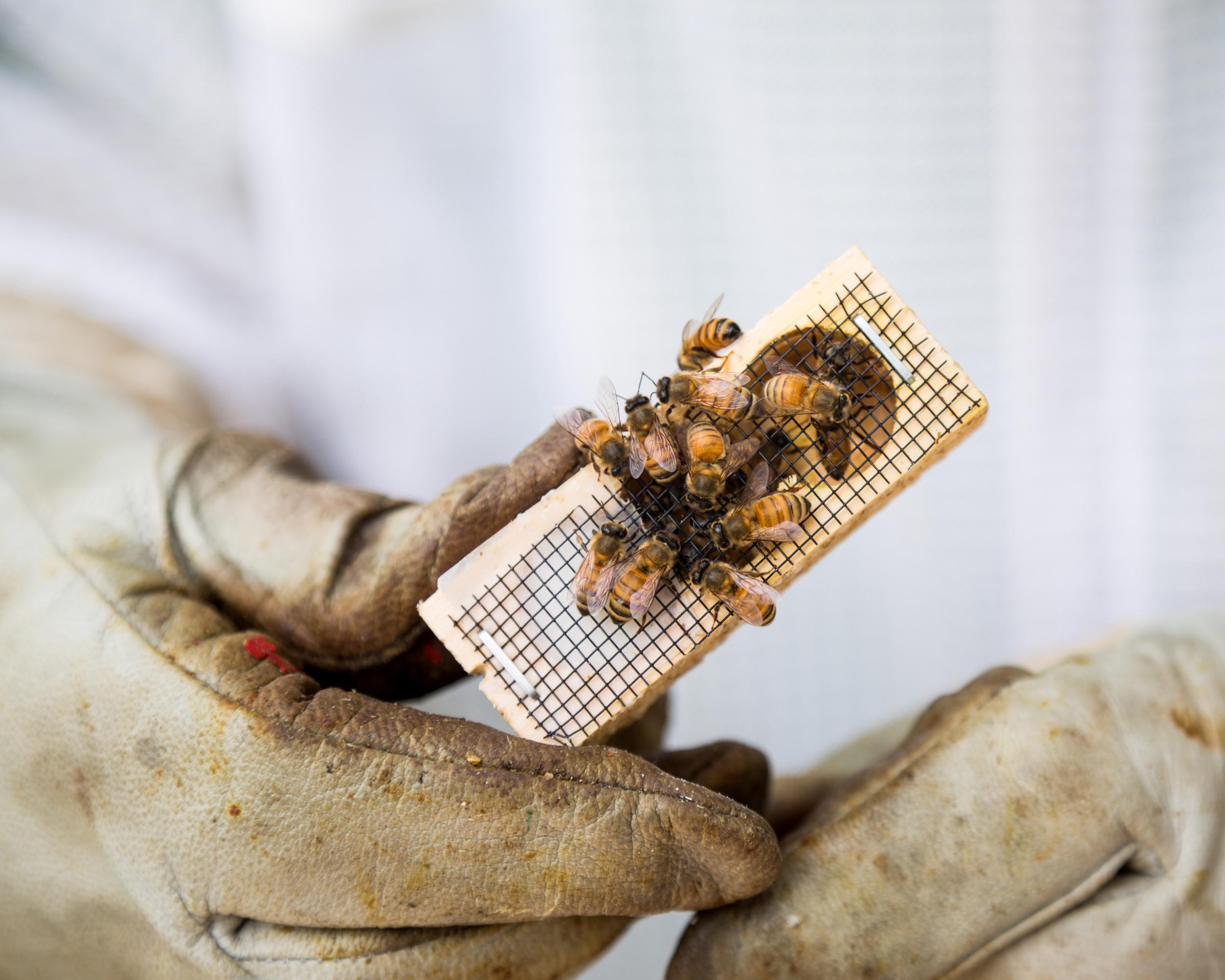 Beekeeper-15.jpg