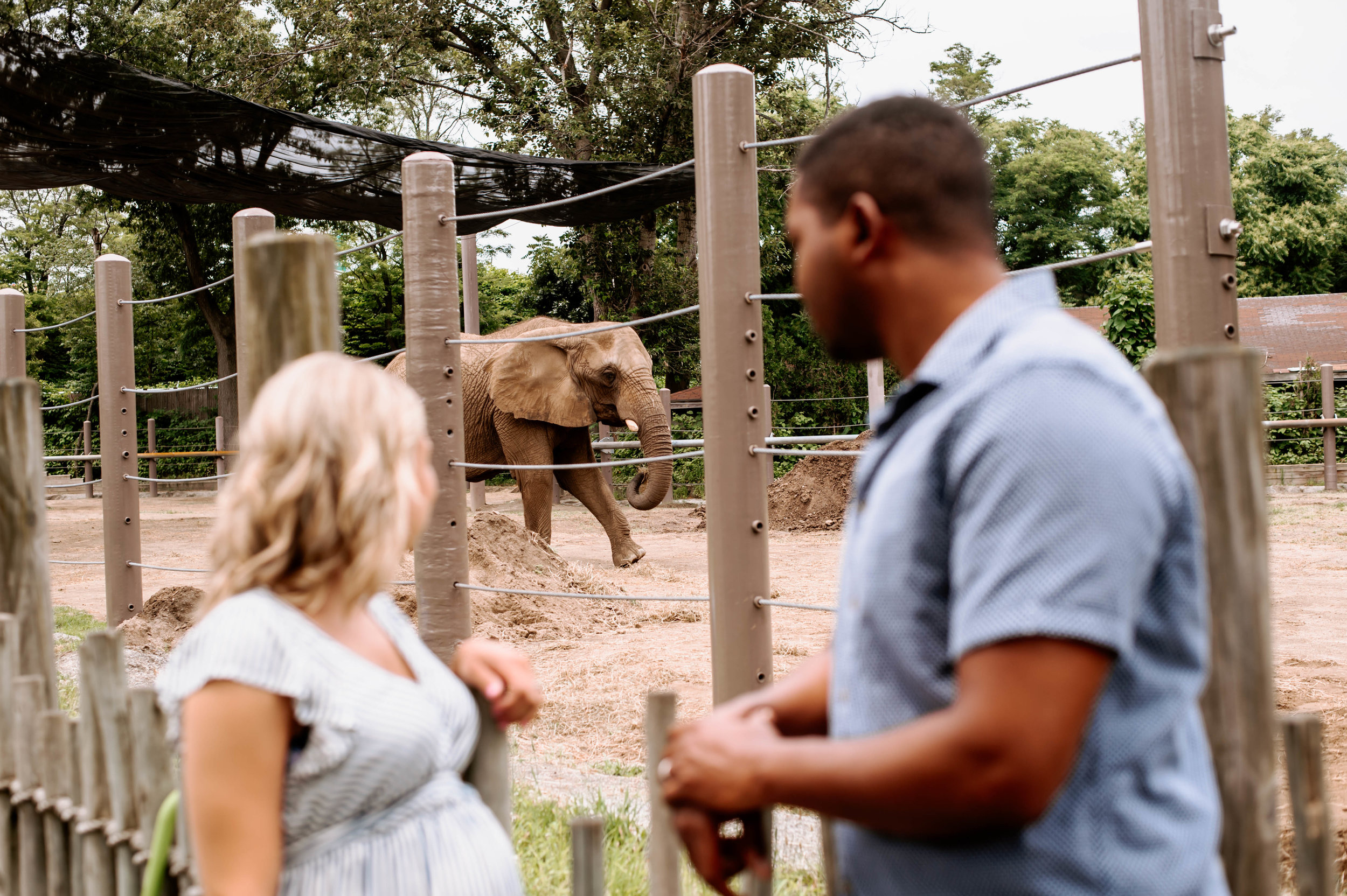 maternity session at the zoo-19.jpg