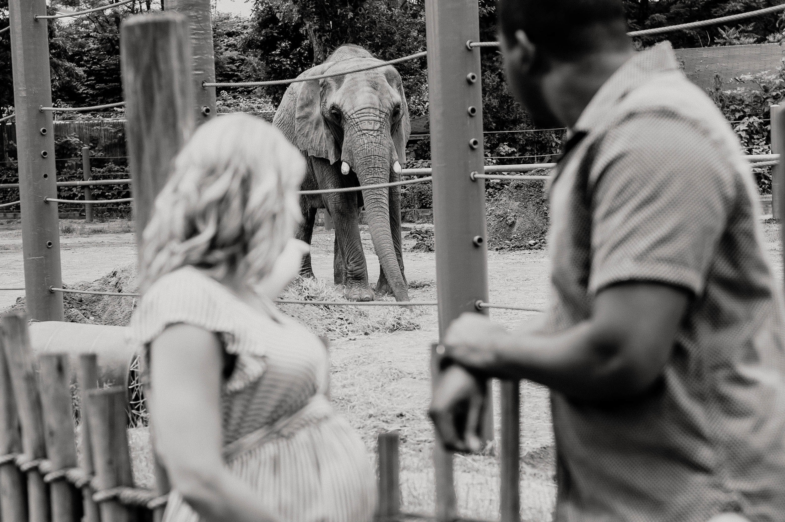 maternity session at the zoo-22.jpg