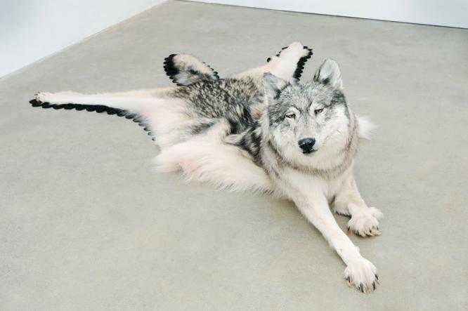 Wolf, 2009; photo credit Wayne Leidenfrost