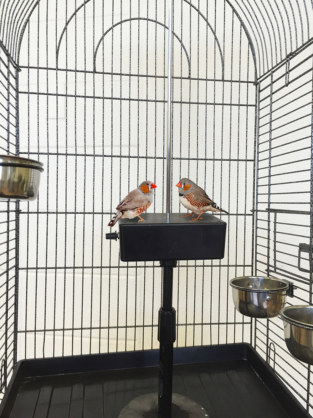 WhileContemplatingTheir Fate in the Stars, the Twins Surround the Enemy, Installation with two finches, cage and theremin, 2003