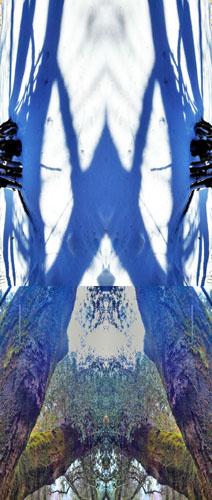 oak shadow web.jpg