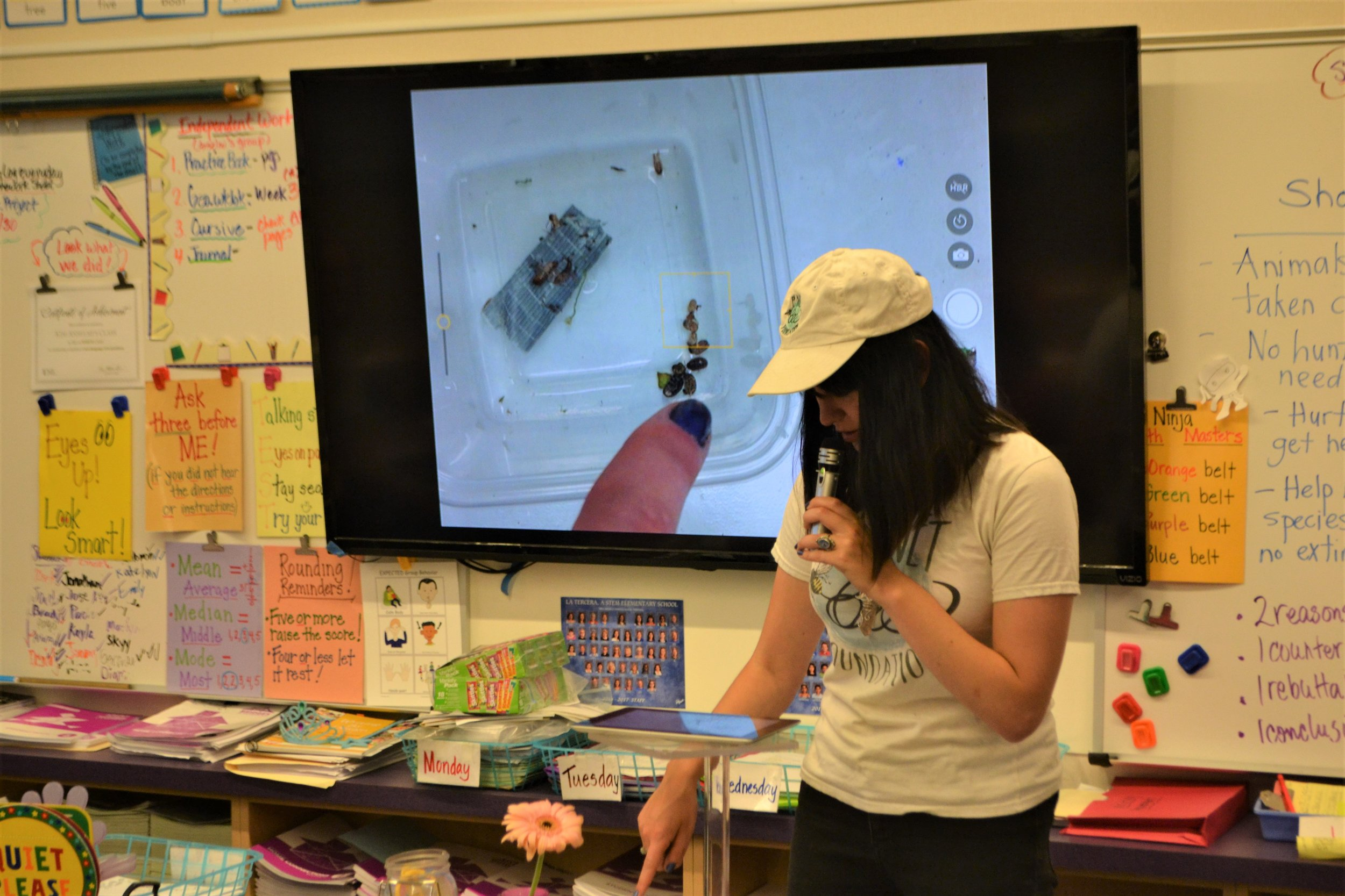 Ayla examines the insects caught by students' light traps at La Tercera Elementary in Petaluma