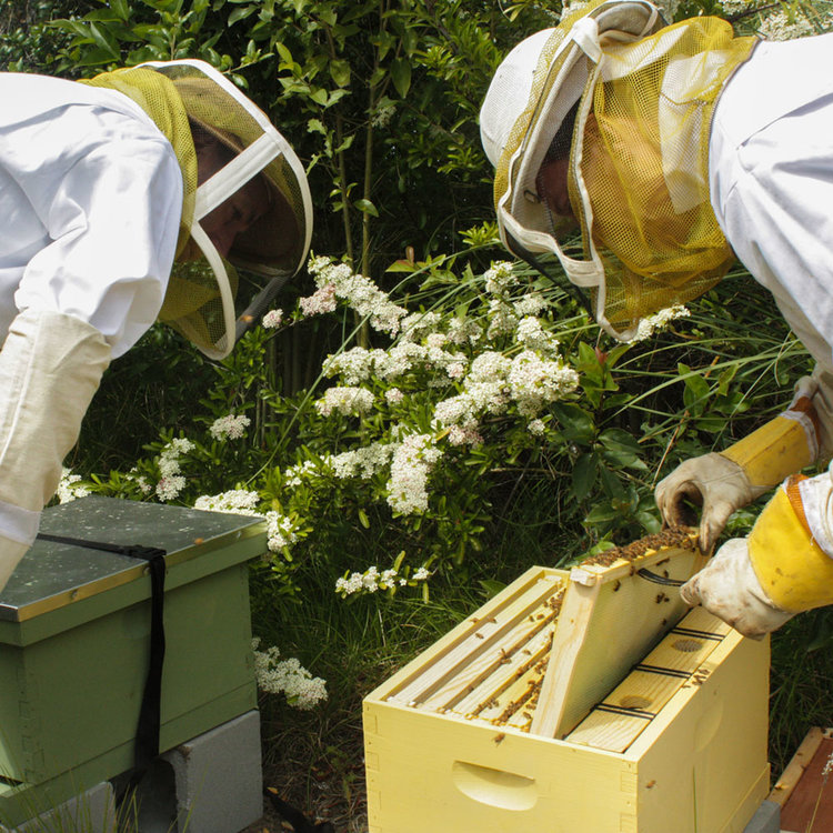 Planet+Bee+and+Google+Bee+Club+Hives (1).jpg