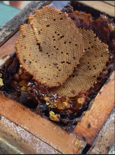 A stingless bee hive. Photo by Stephan Ridgway.