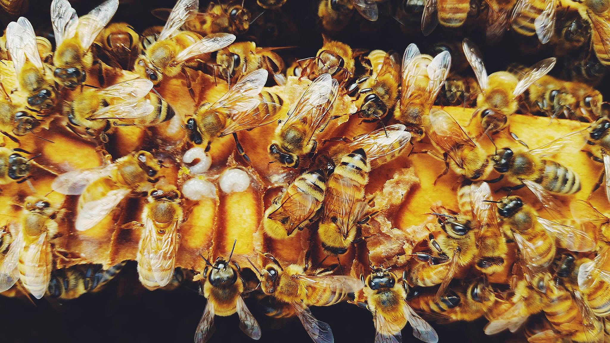 Help Honey Bees Planet Bee Foundation