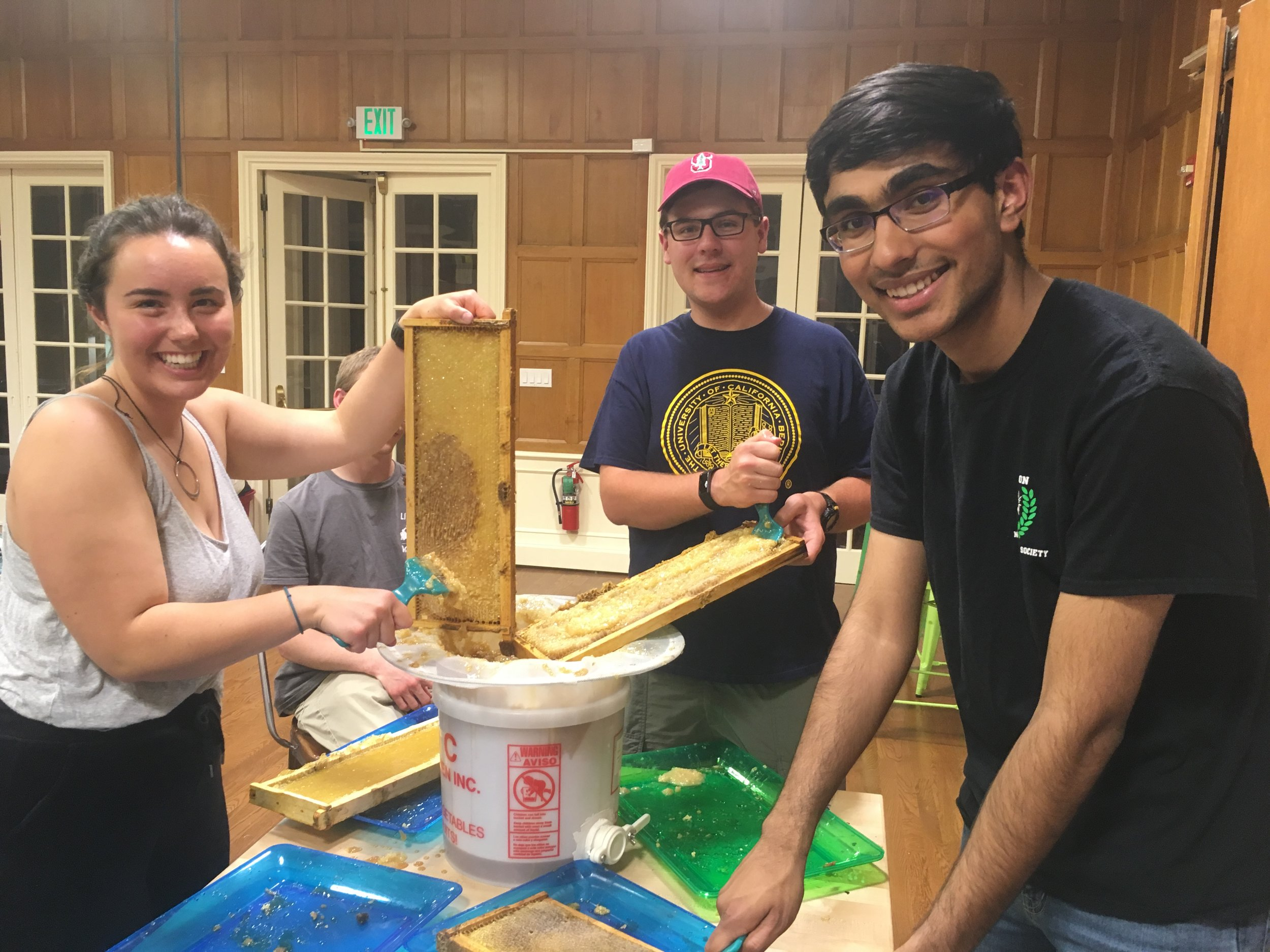 Stanford University students have some fun as they harvest some honey from their campus hives!