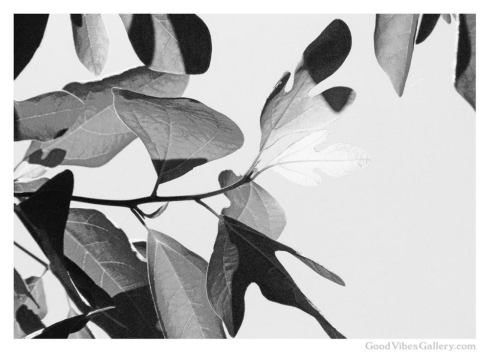 Botanical_Beauty (1).jpg