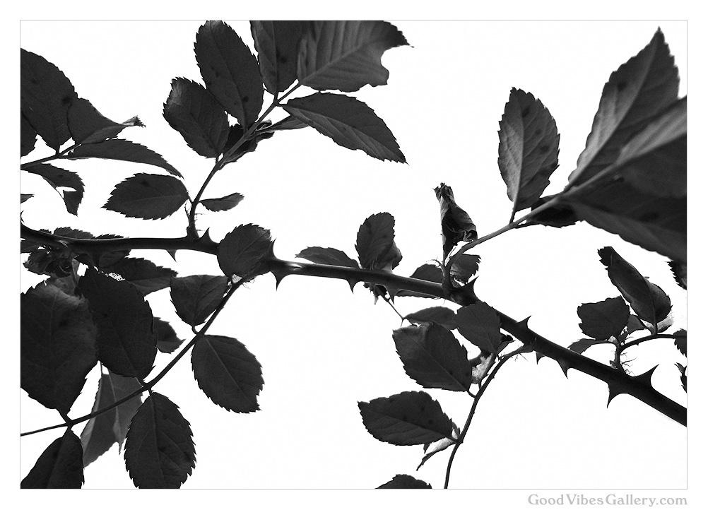 Botanical_Beauty (8).jpg