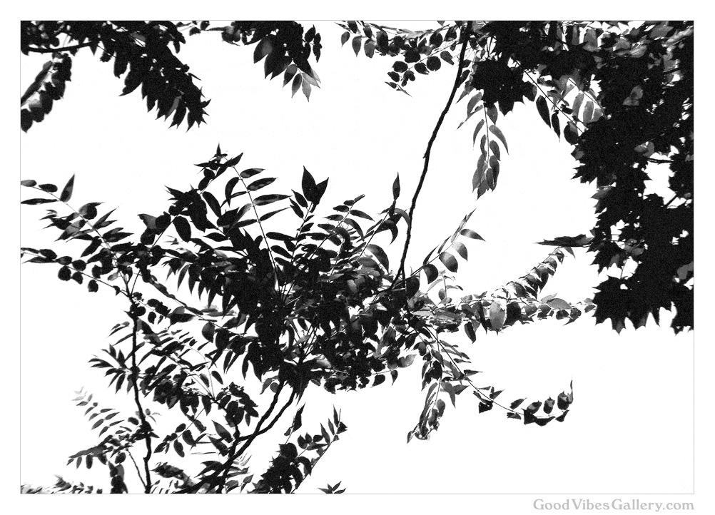 Botanical_Beauty (10).jpg