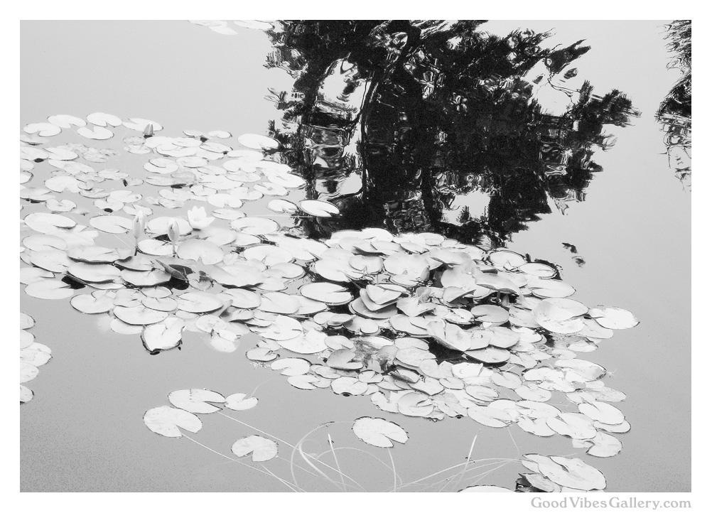 Wondrous_Water (5).jpg