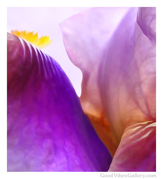 flowers-abstract-paintings-expressionism-fine-art-zen-tao-art-nature-contemporary-painter-georgia-o'keeffe-zen-tao-art-the-yellow-king-good-vibes-gallery