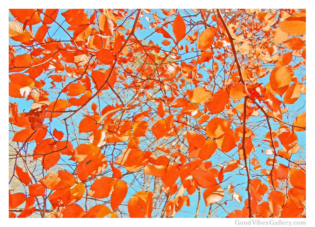 fall-autumn-leaves-painting-photos-nature-photography-fall-colors-foliage-orange-red-green-yellow-everything-changes-goodvibesgallery-good-vibes-gallery