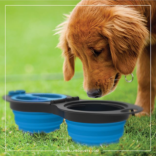 Our collapsible travel pet bowl is now available on our website! Perfect for road trips, camping, and hiking! Link in bio💡