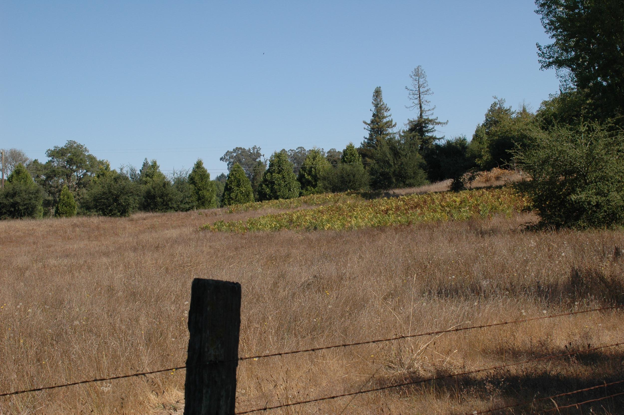 The future vineyard
