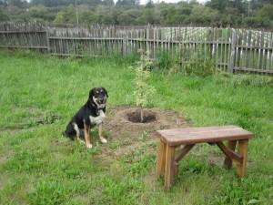 Jake sitting next to Bailey's tree