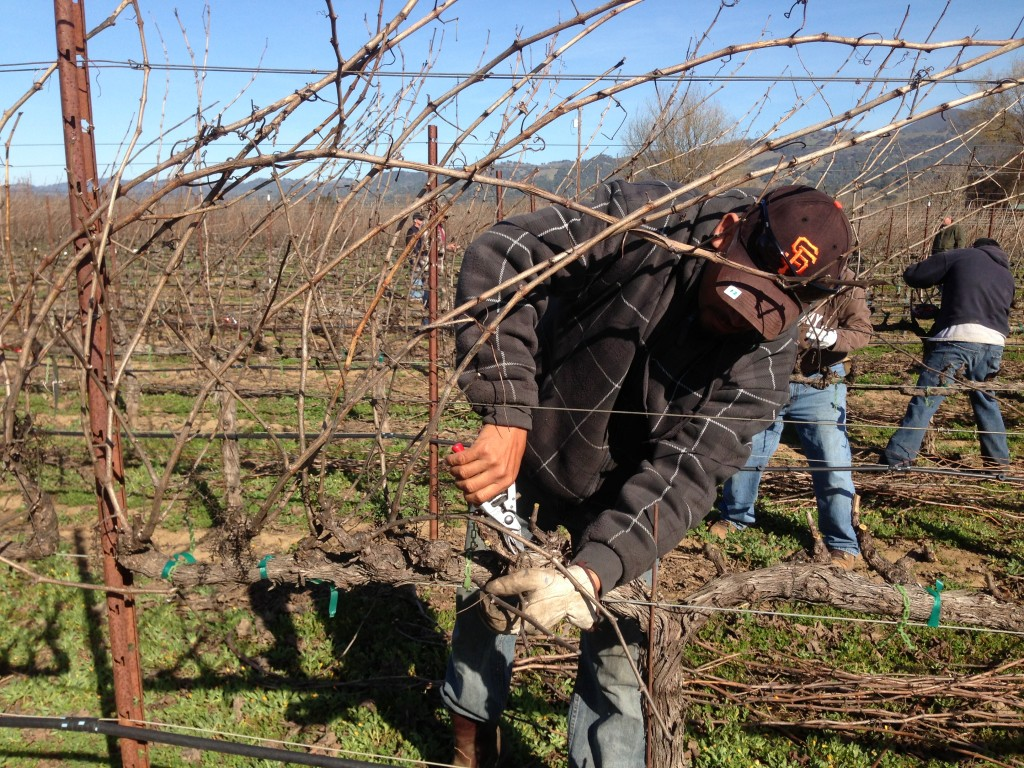 Some pruners had slower times but came out with higher marks because they had fewer mistakes.