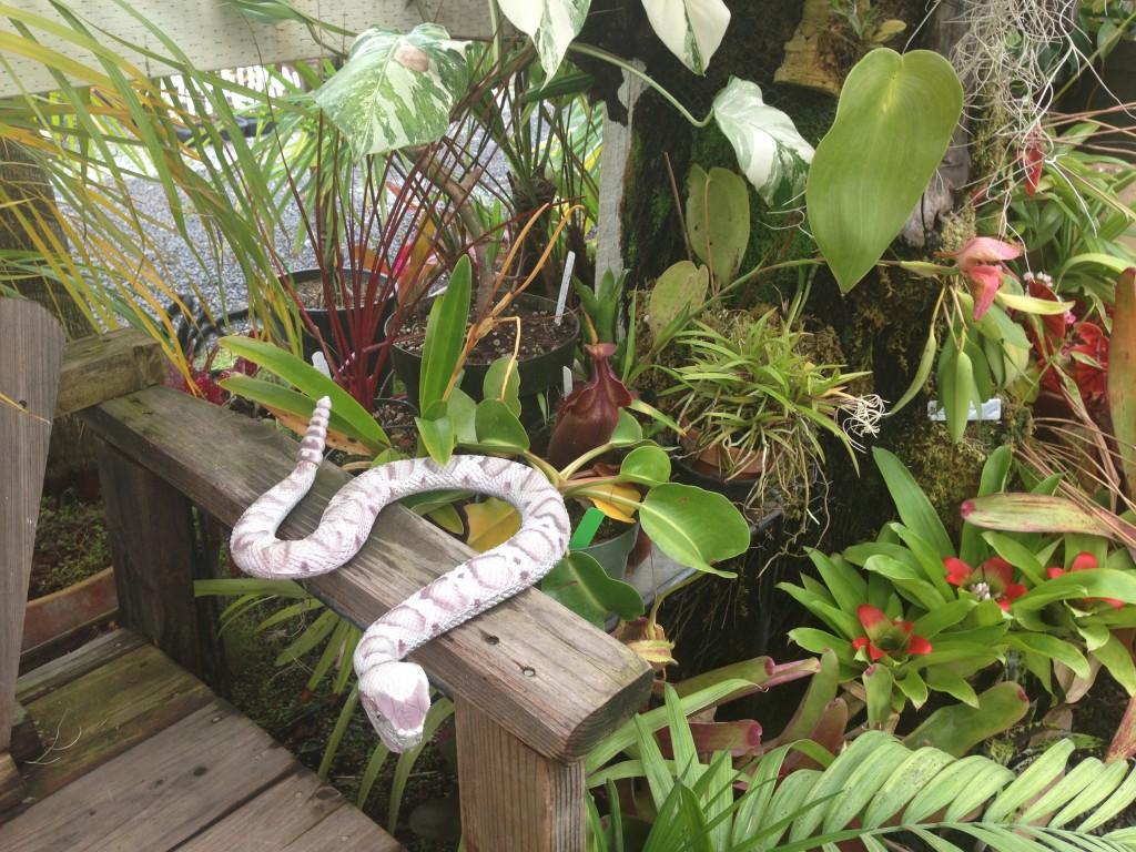 Snake_CaliforniaCarnivores