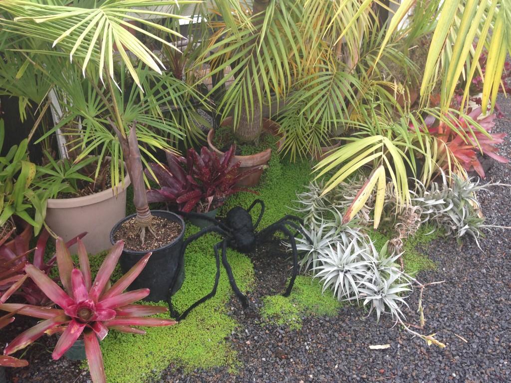 Spider_CaliforniaCarnivores