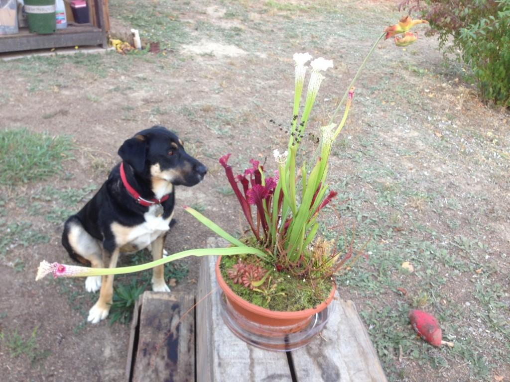 Jakeandplants_CaliforniaCarnivores