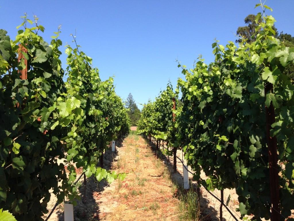 VineyardWalk