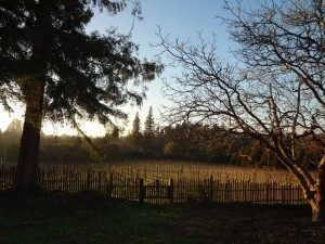 wintervineyard_RussianRiverValley