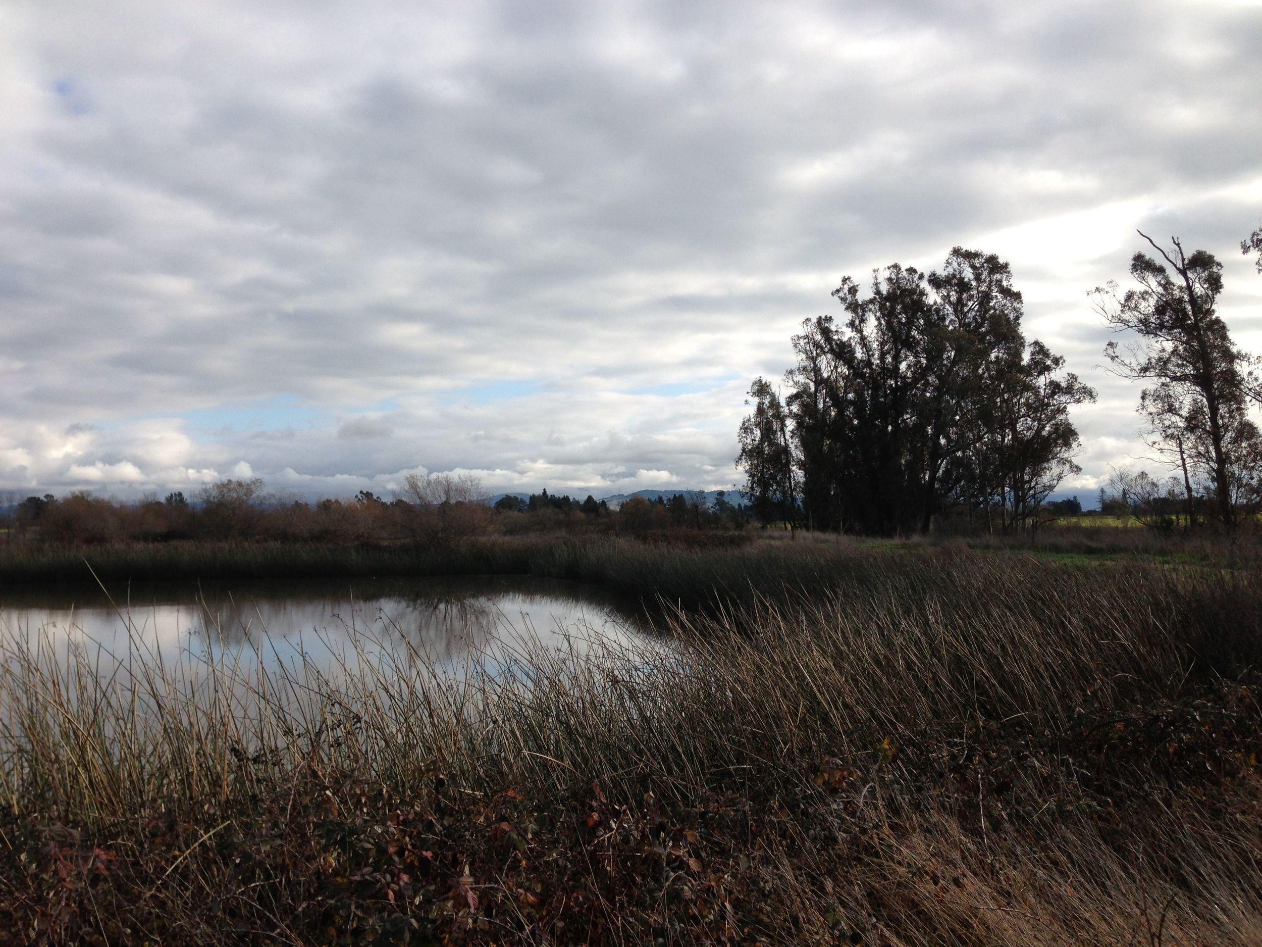 Laguna de Santa Rosa