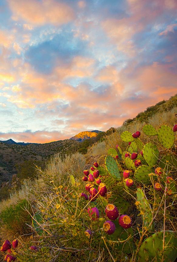 Sandia Foothill Sunset Study