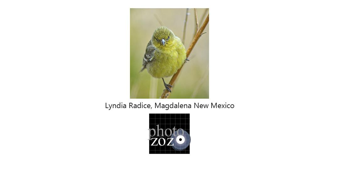 lyndia-radice-12x8x72.jpg