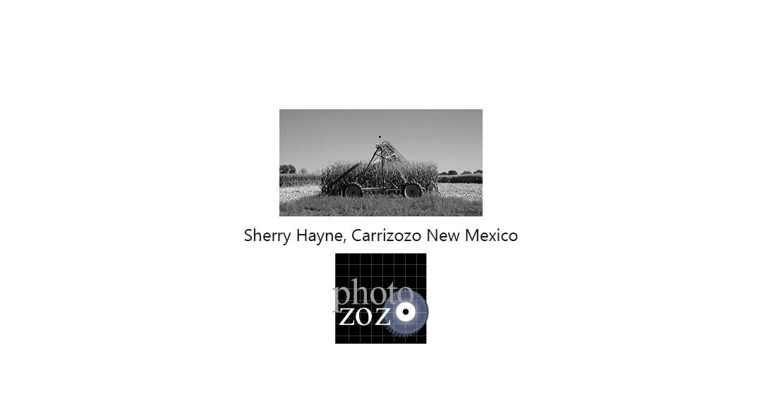 sherry-hayne-title-card.jpg
