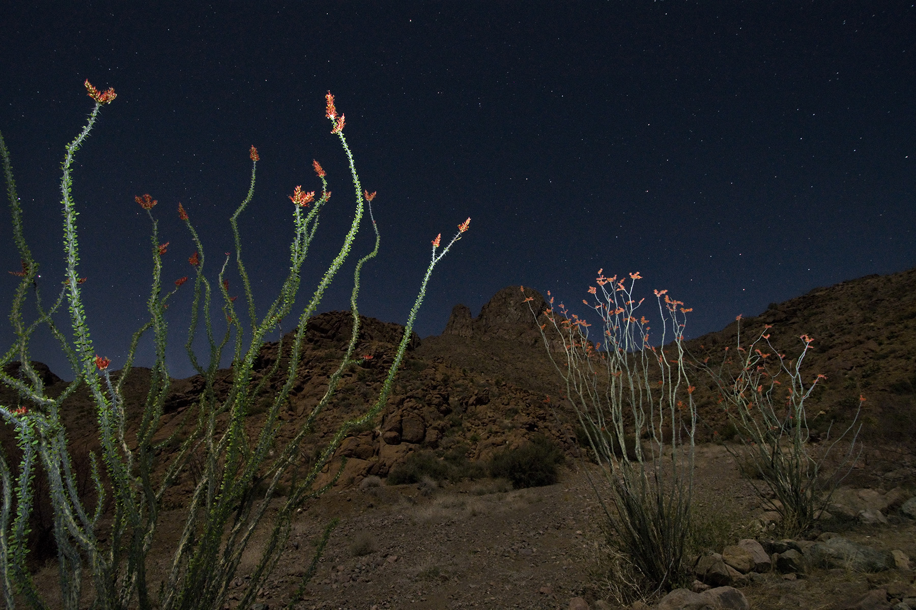 'Yucca Under the Milky Way' , First Place Landscapes, Victor Gibbs