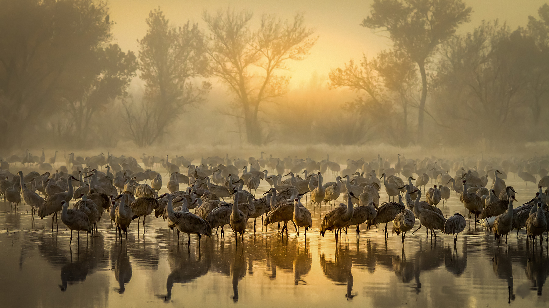 'Foggy Sunrise in Bernado',  1st Place Plants & Animals, Steve Yabek