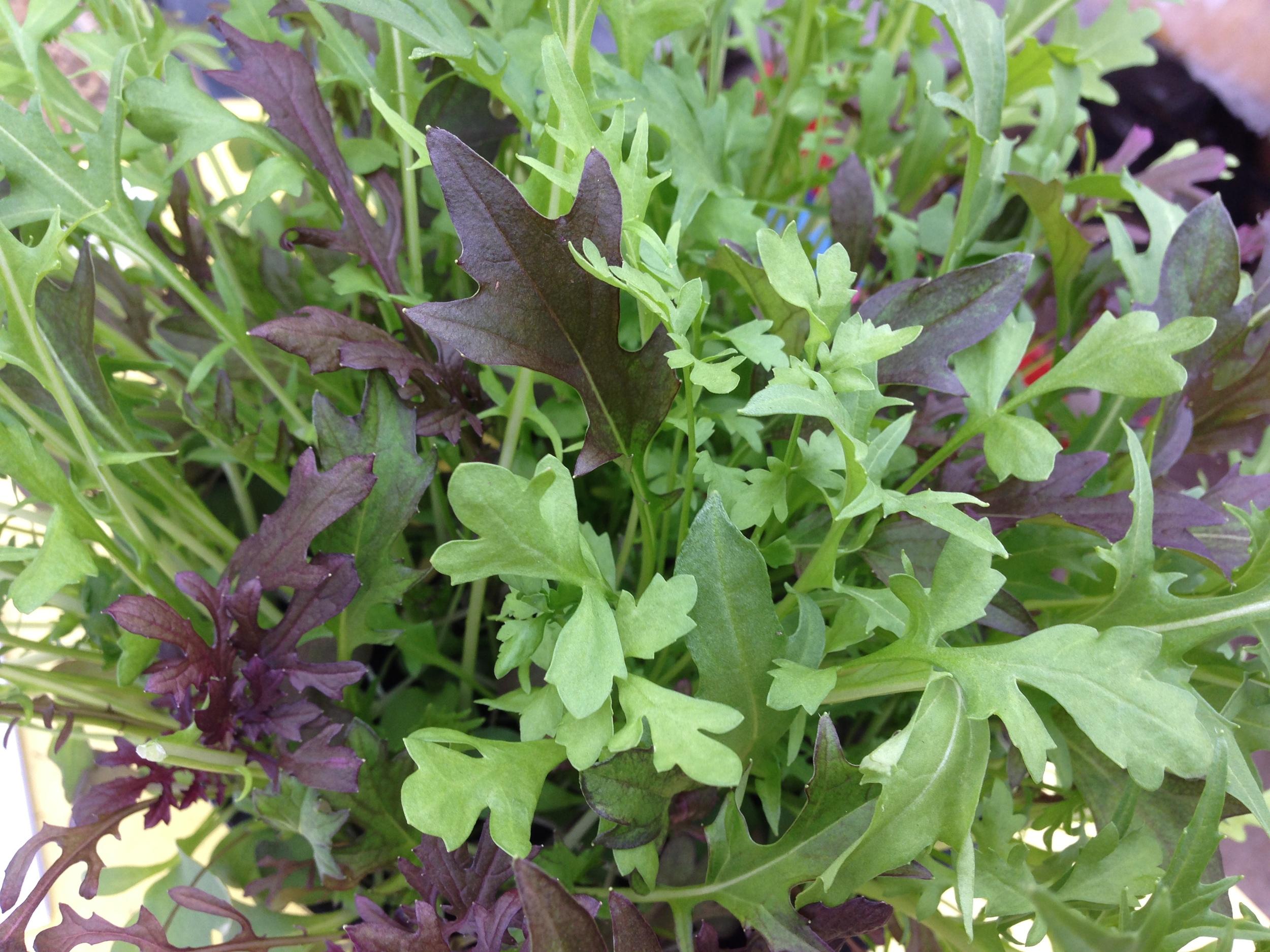 Frilly Leaf Mix