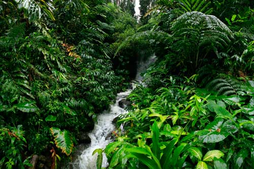 Hawaii rainforest