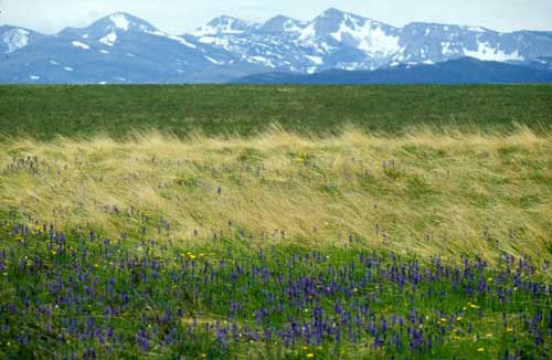 Great Plains Grassland in Montana