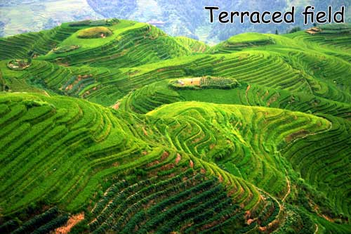terraced-field-titian-named.jpg