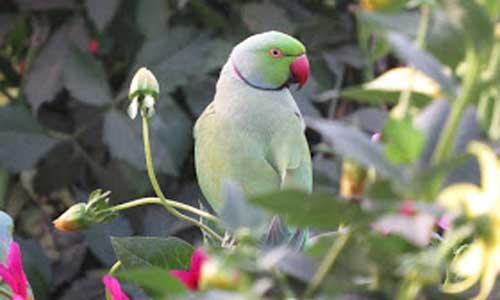 parrot-new.jpg
