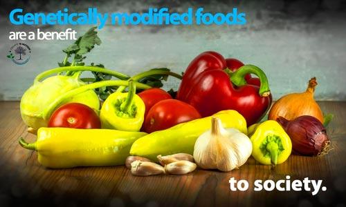 Genetically-modified-food-500x330.jpg
