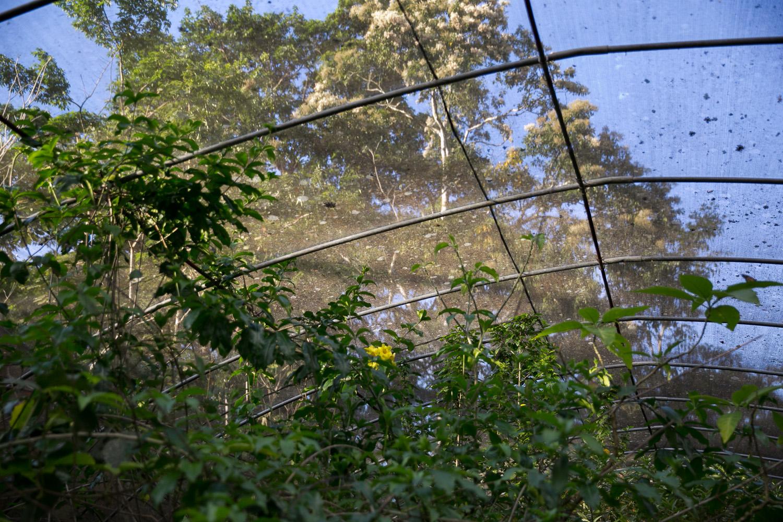 mariposa-9.jpg