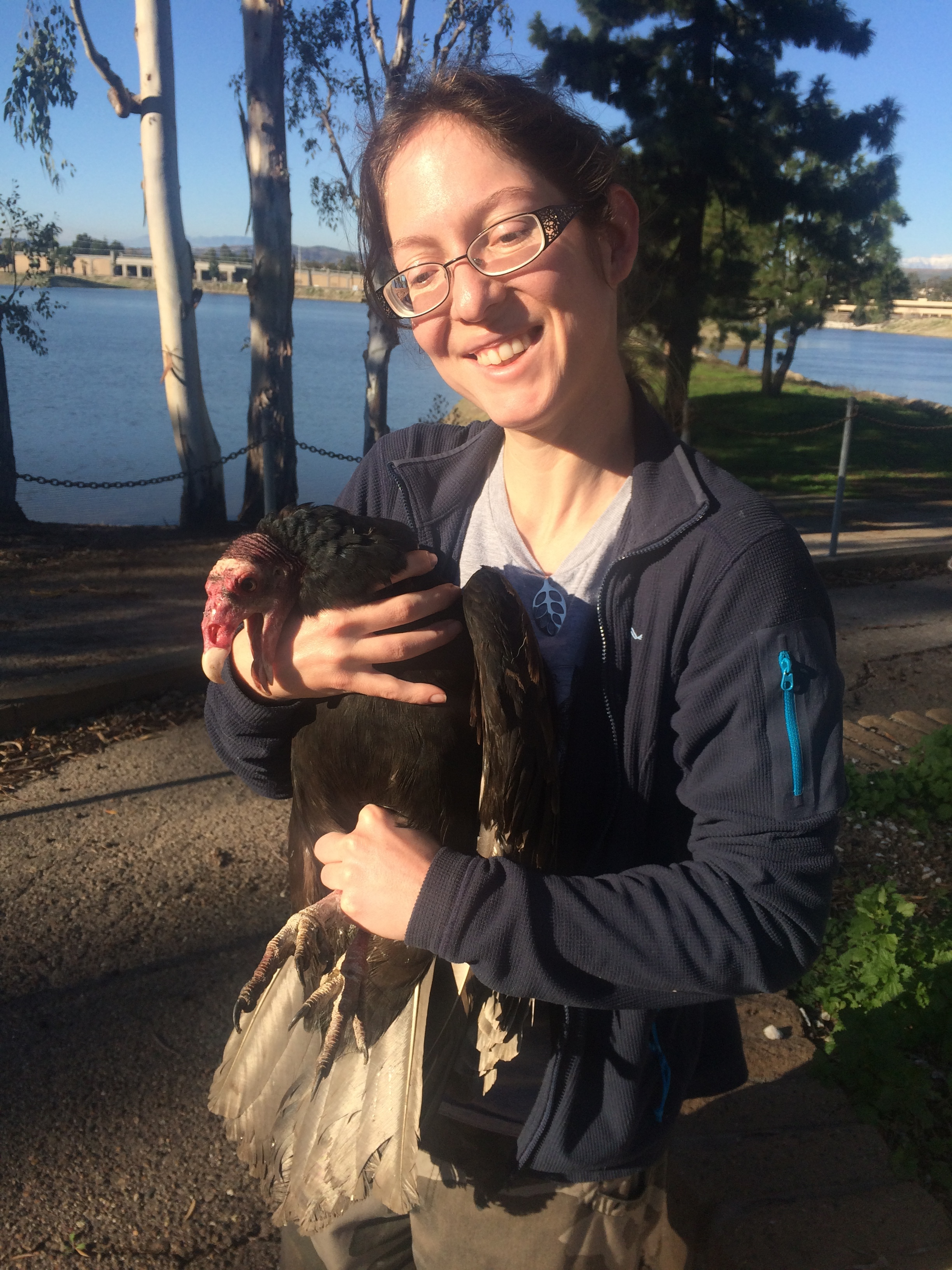 Marla Steele interning this winter with BBI holding a Turkey Vulture captured last week.  This TUVU is about to be tagged and have various samples taken for research efforts