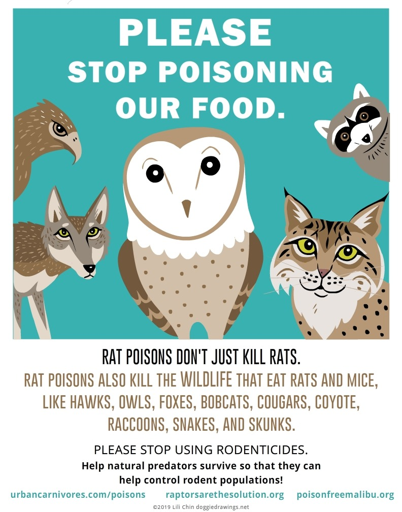 please stop poisoning - lilli chin.jpg