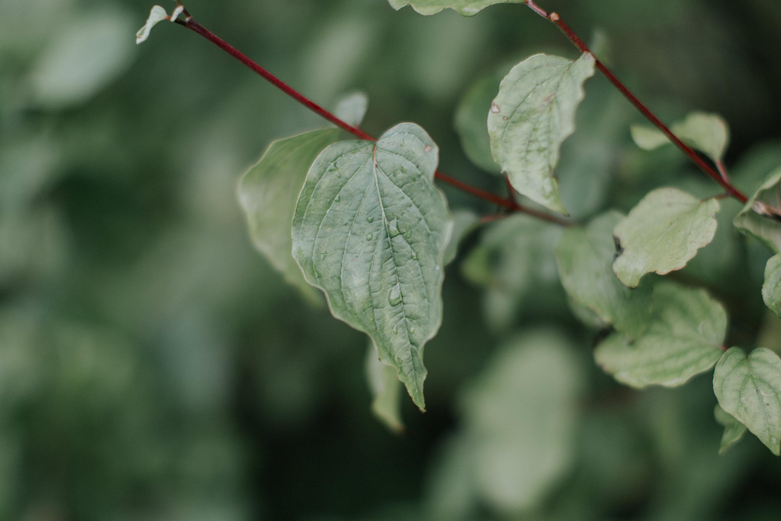 Photography78-LucyRitson-2.jpg