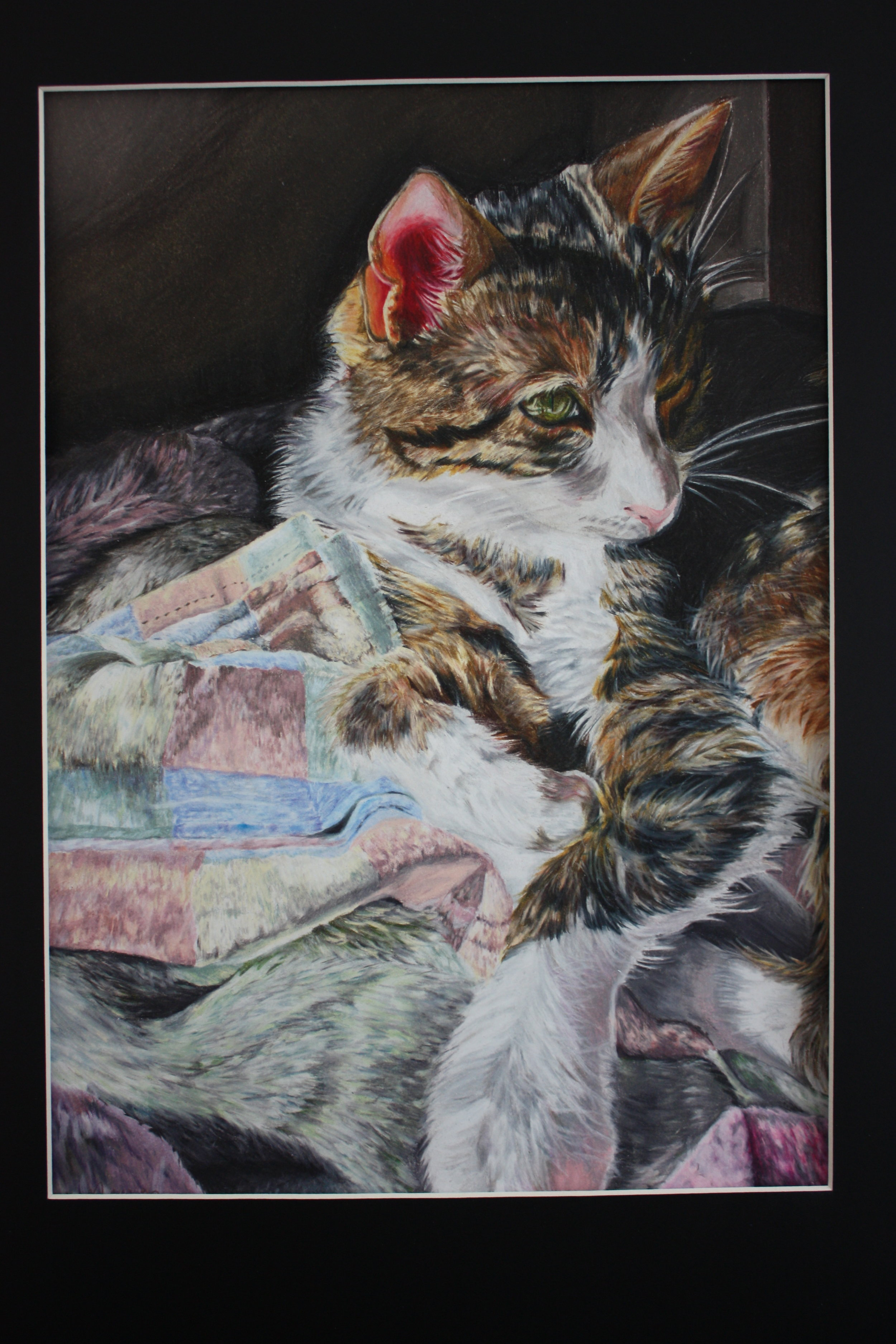 Brianna Nguyen_ 16_ Sunlit Kitten_ US Arts.JPG