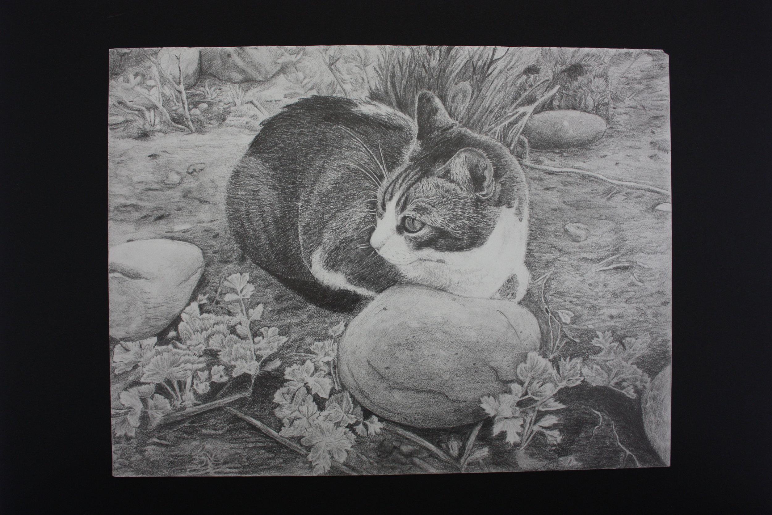 Clair Ma_ 17_ My Cat Coco_ Sherry Art Studio .JPG