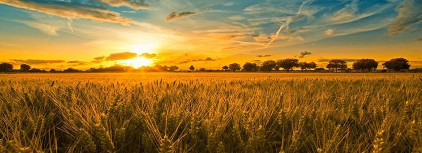 Sunrise Over Wheat Field.jpg